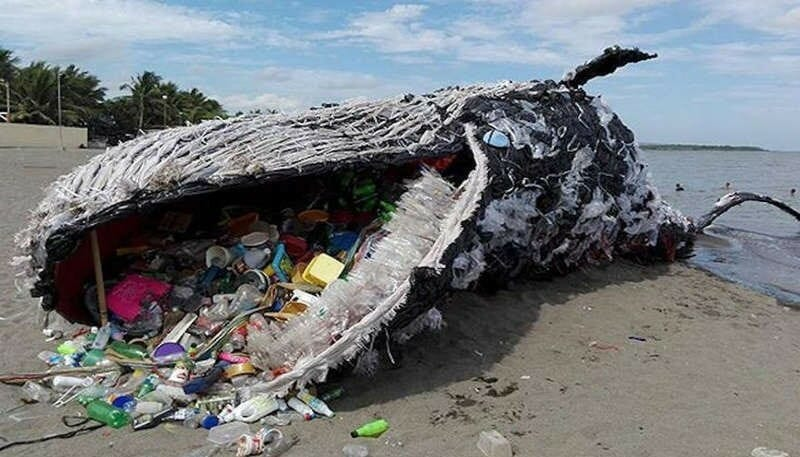 Plastic kills another whale